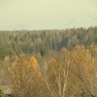 октябрь..костромские леса... :: Михаил Жуковский