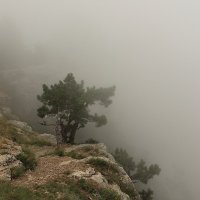 Туман на Ай-Петри :: Cветёлка ***