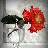 Роза в бокале! :: Владимир Шошин