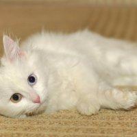 Моя третия кошка! :: Виталий Виницкий