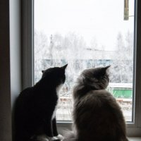дома теплее :: Дмитрий К