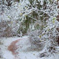 Встречает осень зиму :: Павлова Татьяна Павлова