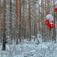 Осень встречает зиму :: Павлова Татьяна Павлова