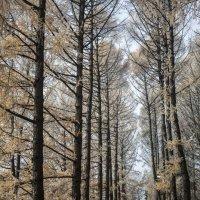 Осенний парк :: Андрей Михайлин