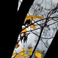 Осень :: Дмитрий С.