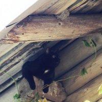 А ласточки уже улетели?! :: Андрей Скорняков