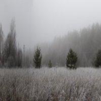 """""""Ёжики"""" в тумане :: Бронислав Богачевский"""