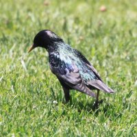 Птица :: Savayr