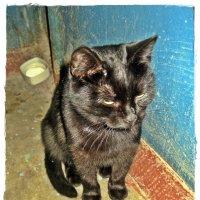 Мне бы Ваши заботы... ( коты и кошки моего подъезда) :: muh5257