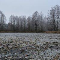 Замерзший пруд :: Сергей Щеглов