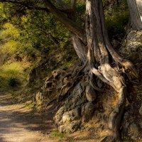 Здравствуй, лес, дремучий лес, полный сказок и чудес :: Ирина Рассветная