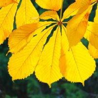 Золотые листья осени :: Светлана
