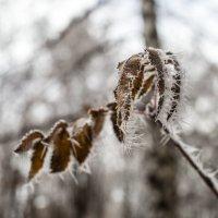 Морозные иглы :: Андрей Михайлин