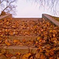 ворох листьев :: Елена