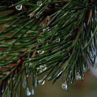 после дождя.. :: Naty ...