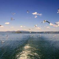 Чайки в море. :: Мила Бовкун