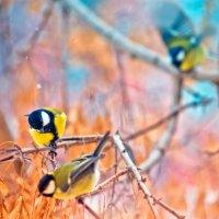 Птички-синички :: Оксана Арискина