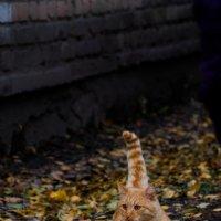 Солнечно рыжий котик :: Алёна Нетесова