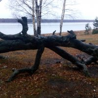Прогулка по финскому заливу :: Наталья Куклина