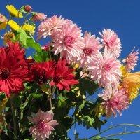 Осенние цветы :: Mariya laimite