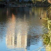 Октябрь,вечерний пруд... :: Тамара (st.tamara)