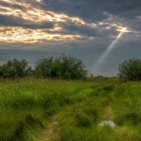 солнца луч... :: Николай Колобов