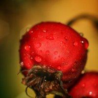 Вот такая ягодка, наверно, сорок пять!! ) :: Ирина Сивовол