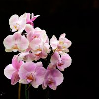 орхидеи.... :: Павел Баз