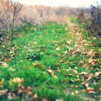 Осенний Адагум :: Михаил Тихонов