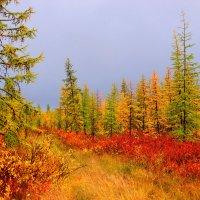 Осень :: Александр Велигура