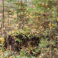 В лесу :: Евгений Мельников