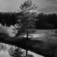 Отражение природы.... :: maxihelga ..............
