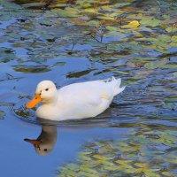 И почему я не лебедь? :: Tatiana Markova