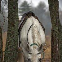 Печальная лошадка.. :: Владимир Питерский