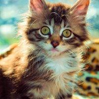 Спит со мной, не курит, не нудит, не врёт - самый лучший парень, потому что кот. :: Наталья Александрова