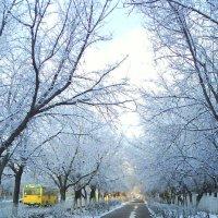 17. Первый снег 2. :: Александр