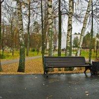 В осеннем парке,в ноябре. :: Виктор Евстратов