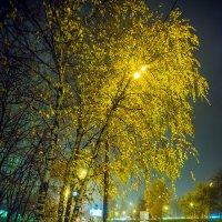 Золотая берёзка :: Игорь Герман