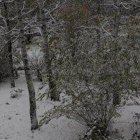 Первый снег 15 октября 2015 г. :: Олег Афанасьевич Сергеев