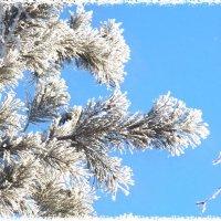 Дыхание зимы :: Domna Kuznechic
