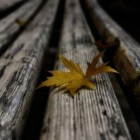 Тихая, тёплая, нежная осень листья увядшие всюду разносит ........ :: Татьяна #****#