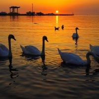 Белые лебеди ...... :: Татьяна #****#