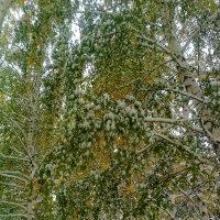 Первый снегопад. :: Андрей