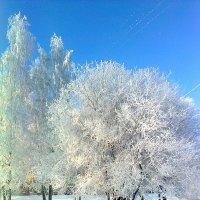 Вот и зима пришла. :: Андрей