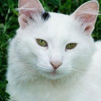мой кот :: Алёна Нетесова