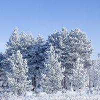 В Сибирь пришла зима. :: ЛЮБОВЬ ВОЛГИНА
