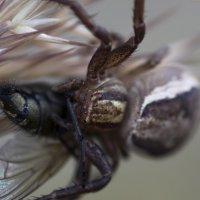 паук имуха :: olgert6969