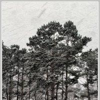 Октябрь. Первый снегопад в парке. :: gregory `
