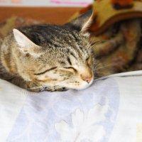 Спит котяра, молока оппился. :: Света Кондрашова