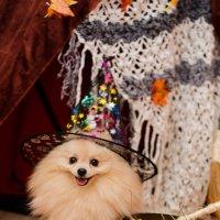 весёлый пёс :: Катерина Терновая